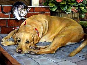 Dog and Kitten, a pet portrait